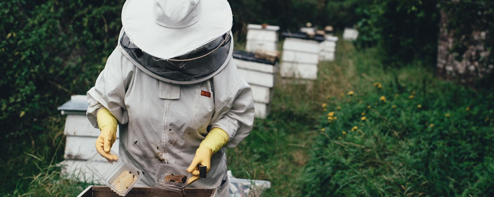 Bee keeper working with bees